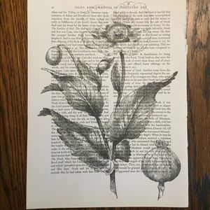 Other - Vintage Poppy Book Print